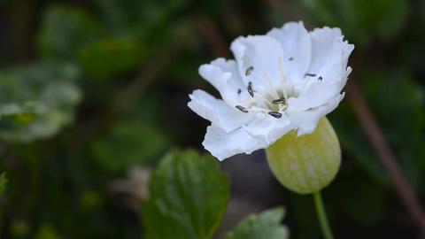 White bloom Footage