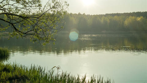 Forest lake at evening Footage