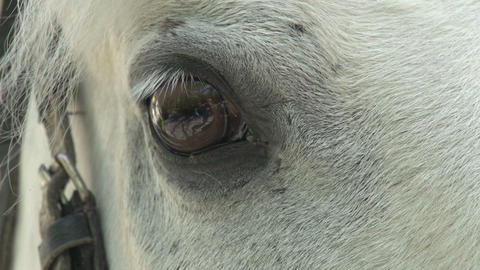 Equine Eye HD Footage