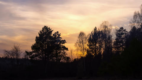 Sunset behind the trees. Time Lapse Footage