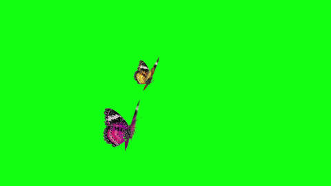 couple butterfly warm color CG動画素材