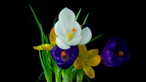 Flowers bouquet , deep blue Footage