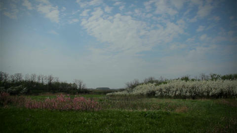 Wild Nature in Spring, Blackthorn Stock Video Footage