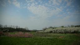 Wild Nature in Spring, Blackthorn Footage