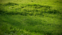 Hills covered with lush, green grass. morning Footage