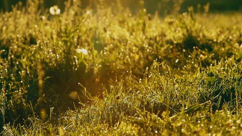 lush grass the early sun rays camera glides Shooting with crane 4 Footage