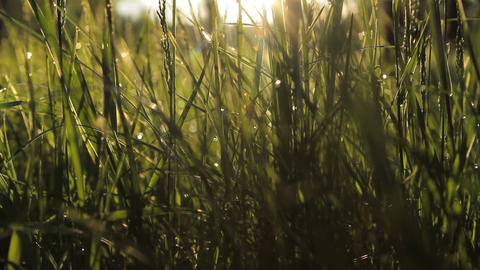 Wind Shakes The Grass At Dawn stock footage