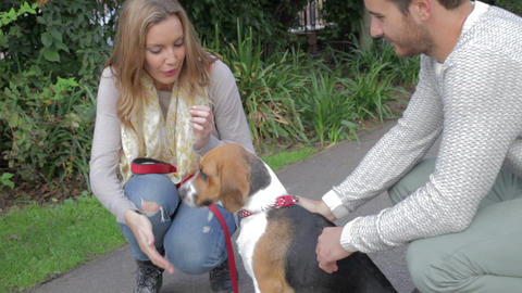 Couple Taking Dog For Walk In City Park Footage