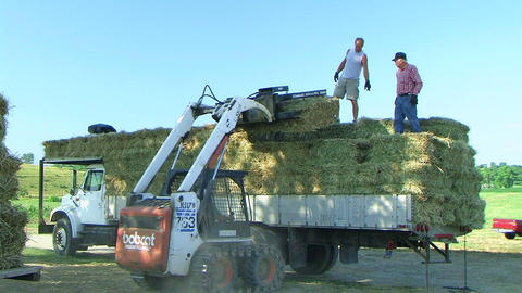 Farmers Loading Hay 02 Stock Video Footage
