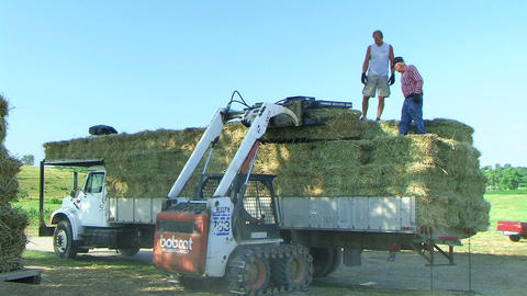 Farmers Loading Hay 02 Footage