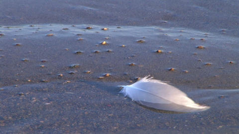 Feather Floating on Shore Stock Video Footage