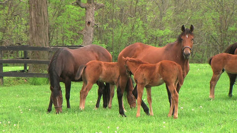 Foal Nursing Footage