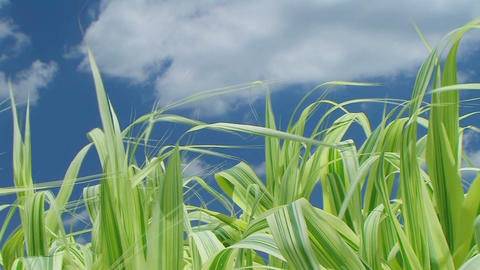Grass Against Sky With Clouds ビデオ