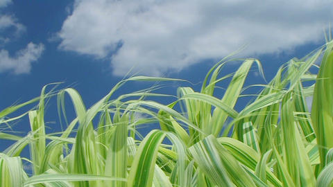 Grass Against Sky With Clouds Stock Video Footage