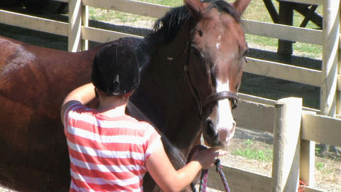 Horse Being Groomed Stock Video Footage