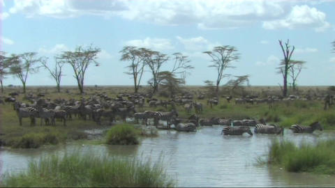 African Wildlife (SD)