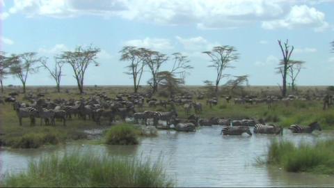 African Wildlife (SD)