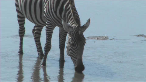 African Wildlife (SD) 0