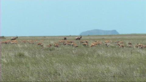 African Wildlife (SD) 1
