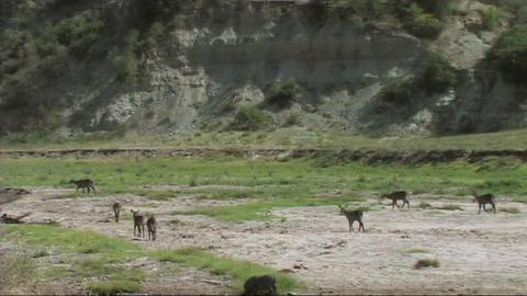 Wildlife of Tarangire Stock Video Footage
