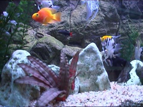 fish in aquarium Stock Video Footage