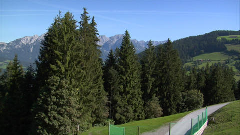 fly down alp mountain between trees Stock Video Footage