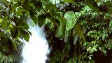 Waterfall Between Tree stock footage