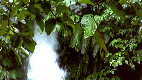 waterfall between tree Stock Video Footage