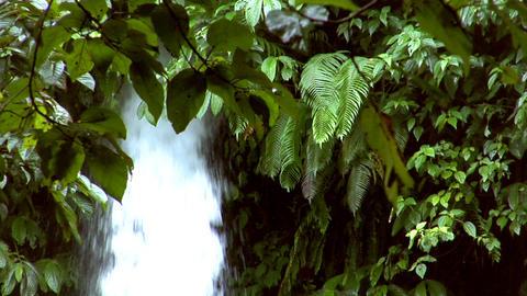 waterfall between tree Stock Video Footage