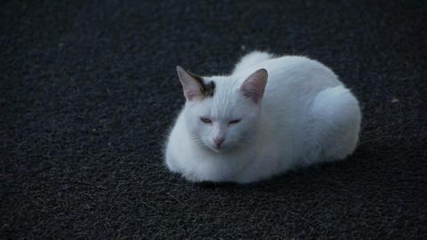 A Cute cat ビデオ