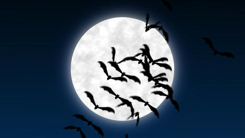 Bats over moon Stock Video Footage