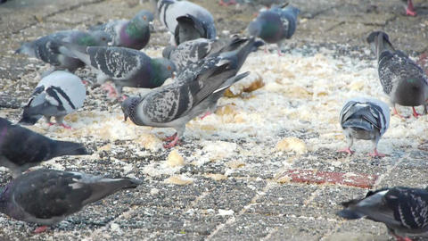 Dove birds in the city Stock Video Footage
