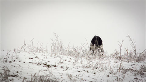 Spotted Dog. Sitting In The Snow. It's Snowing. Ho stock footage