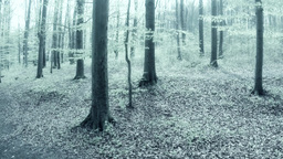 Forest In Infrared Shooting stock footage