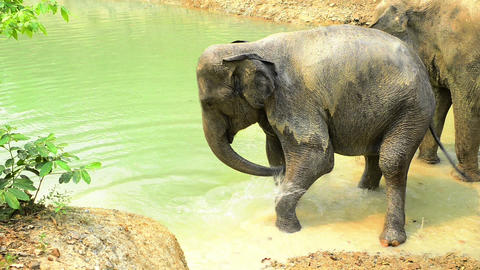 Water Elephants Footage