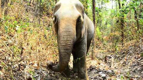 Elephant Watching Footage