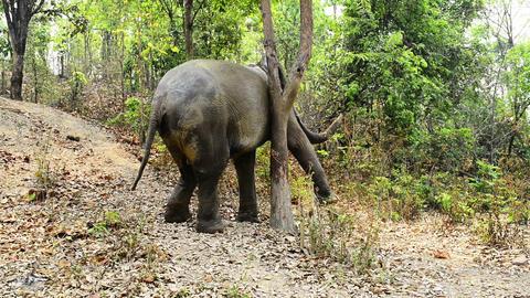 Elephant Itch Footage