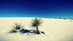 White Sands Desert, New Mexico, Usa stock footage