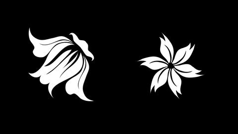 floral sets Animation