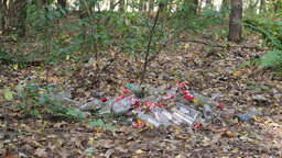 Dump in the forest - glass and plastic bottles. 1 Live Action