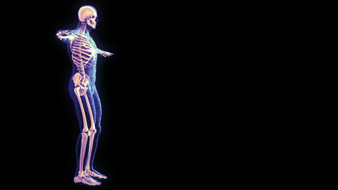Xray Scan stock footage