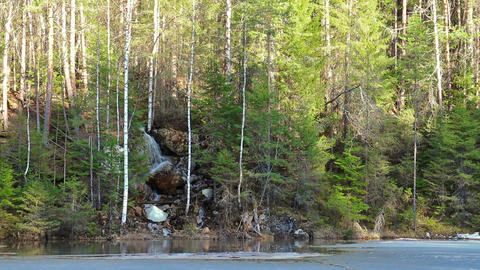 Waterfall in the coniferous forest Footage