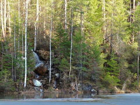 Waterfall in the coniferous forest. 640x480 Footage
