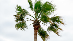 palm tree Live Action