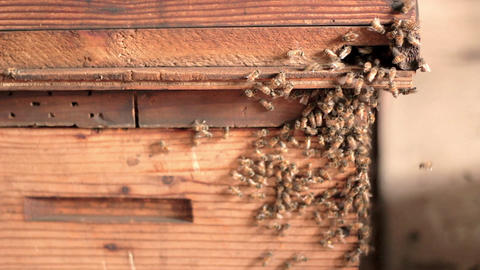 Bees Entering Hive Mid stock footage