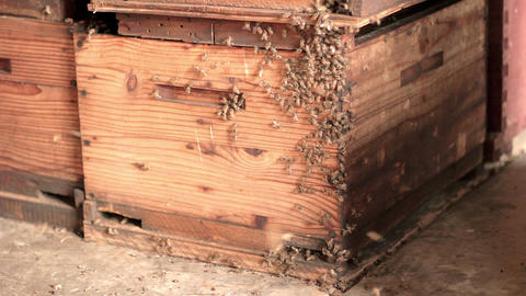 Bees entering hive side Footage