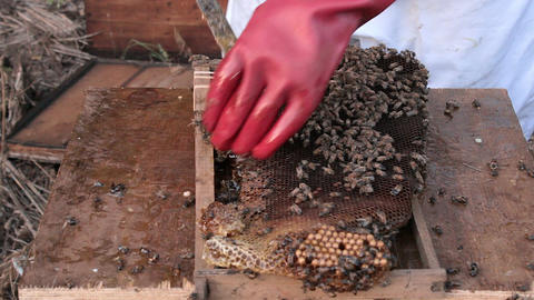 Working bee hive frames 01 Footage
