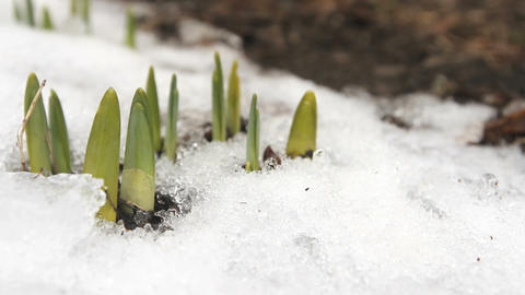 Spring Thaw Time Lapse Footage