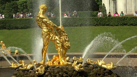 Samson Fountain. Peterhof. Fountains. Petrodvorets Footage
