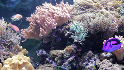 Sea Life - Coral. More in description field Live Action